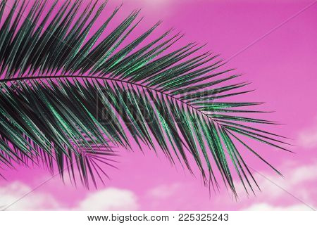 saturated pink sky with palm leaf, tropical background