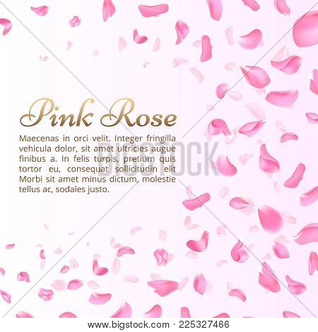 Pink rose or sakura falling petals. Elegant romantic vector background. Sakura flower petal flying banner, blossom floral illustration