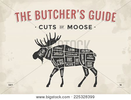 Cut of meat set. Poster Butcher diagram, scheme - Moose. Vintage typographic hand-drawn moose silhouette for butcher shop, restaurant menu, graphic design. Meat theme. Vector Illustration