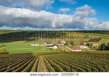 Green Vineyards Of The Loire Valley, France