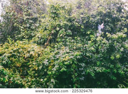 heavy rain on a background of wet leaves on a spring morning
