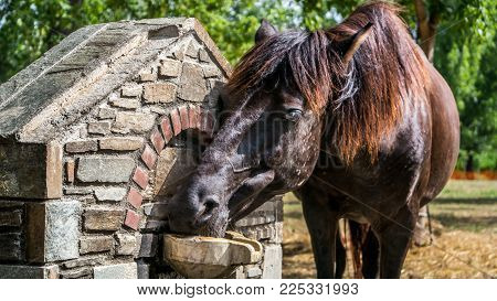 A Beautiful Horse Drinking Water Under The Summer Sun In A Ranch