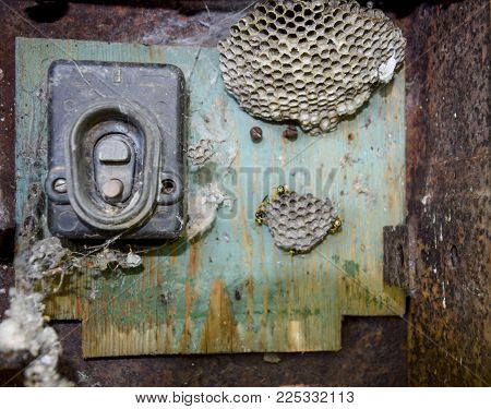 Nest of wasps in the old electrical switchboard. Wasp polist