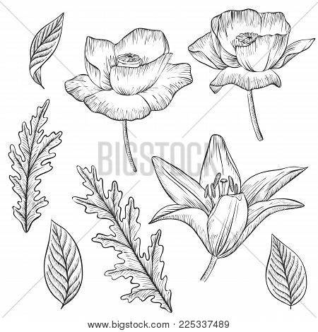 vintage vector floral set of isolated elements in victorian style, flowers, buds and leaves of poppy and liliy, imitation of engraving, hand drawn design elements