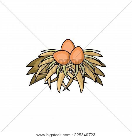 vector flat chicken hen brown eggs in hay nest isolated icon. Illustration on a white background. Farm poultry chicken objects for advertising, poster design