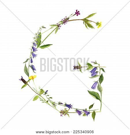 watercolor drawing letter G from wild plants and flowers, floral typeface element, hand drawn nature background