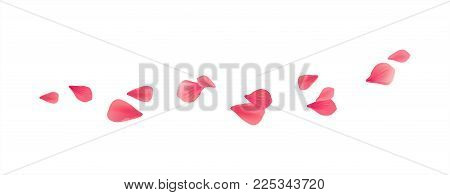 Red flying petals isolated on White background. Sakura Roses petals. Vector EPS 10 cmyk