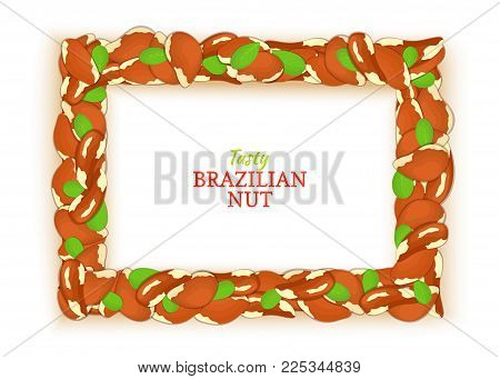 Horizontal rectangle frame composed of delicious brazilian nut. Vector card illustration. Nuts brazil frame, walnut fruit in the shell, shelled for packaging design of breakfast cosmetics detox diet