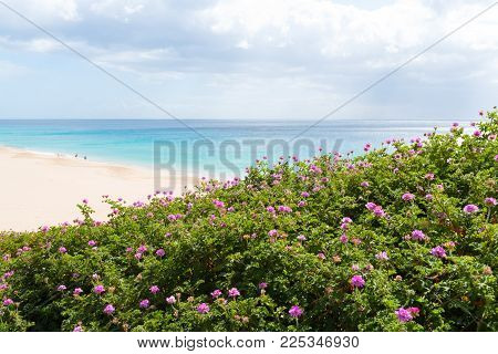 purple blossom on bushes with people walking on wide beach with turquoise ocean in distant background on sunny day