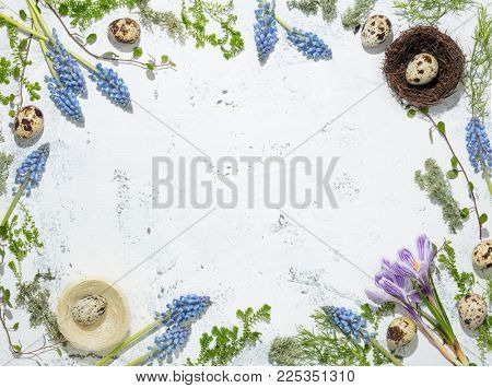 Easter background. Quail eggs in the nest and Muscari flower on vintage background