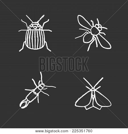 Insects chalk icons set. Colorado beetle, honey bee, earwig, moth. Isolated vector chalkboard illustrations