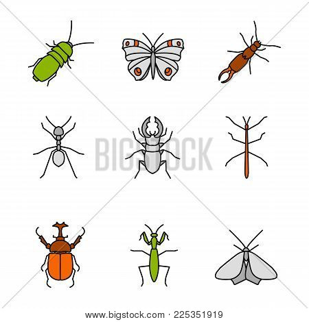 Insects color icons set. Darkling and hercules beetles, butterfly, earwig, stag bug, phasmid, moth, ant, mantis. Isolated vector illustrations