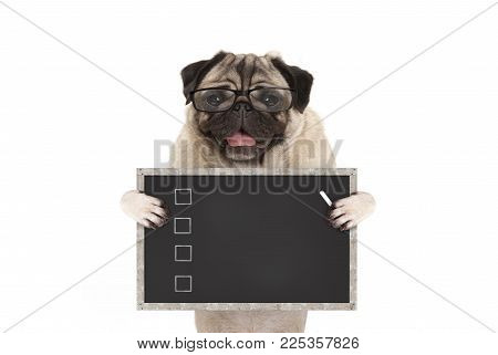 cute male pug dog puppy holding up blank checklist on blackboard with check boxes drawn with chalk, isolated on white background