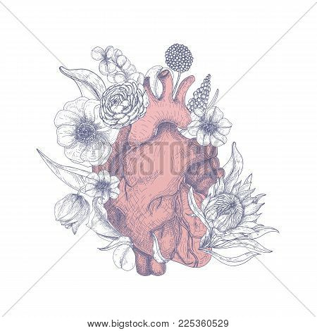 Gorgeous anatomical heart surrounded by beautiful blooming flowers hand drawn on white background. Romantic vector illustration in engraving style for Valentine s day greeting card, party invitation