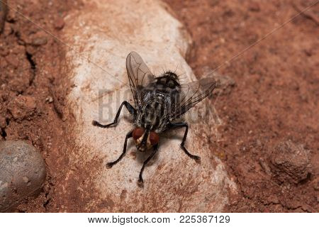 Housefly is sitting on a big gray stone. Animals in wildlife. Summer day.