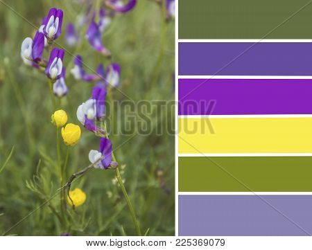 Palette Of Spring Flowers. Color Matching Palette