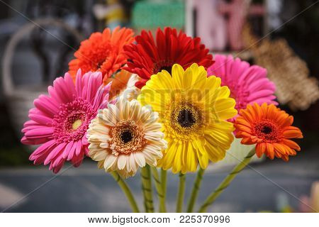 vivid and bright gerberas of different colors. flowers mood.