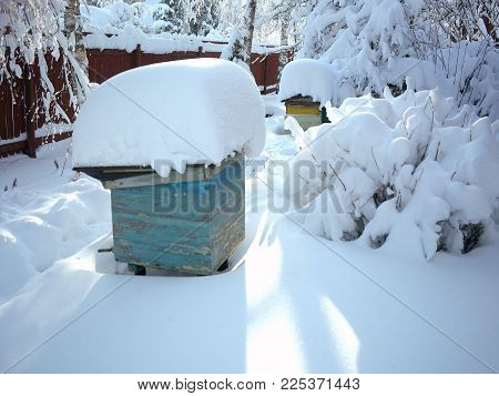 Trees, beehives and shrubs in a garden covered with massive snow, focus in the foreground