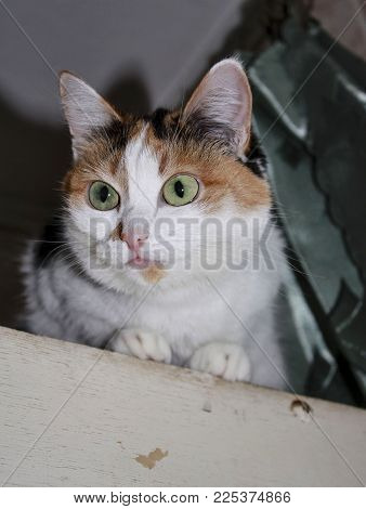beautiful tricolor domestic cat is concerned, looking to the side