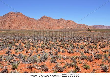 Beautiful landscape of the Namib desert during rainy season, Namibia, Africa