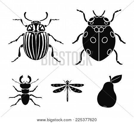 Insect, Bug, Beetle, Paw .insects Set Collection Icons In Black Style Vector Symbol Stock Illustrati