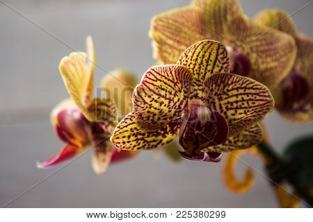 a beautiful orchid on the rise on a wooden background