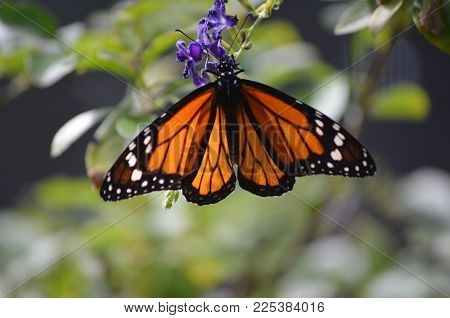 Vibrant Coloring to A Longwinged Viceroy Butterfly