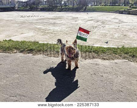 Canine Security Flag