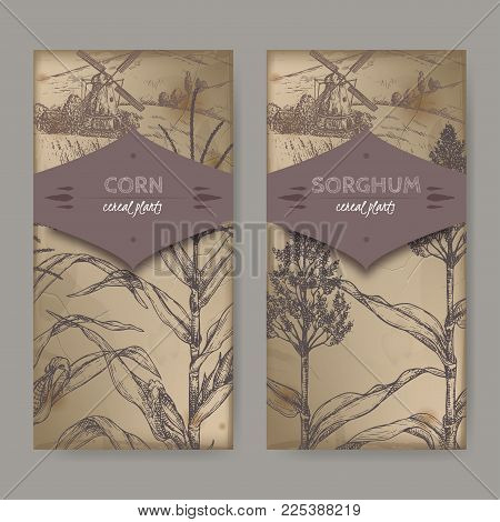 Ste of two vintage labels with Sorghum bicolor and Corn aka Maize or Zea mays sketch and field landscape. Cereal plants collection. Great for bakery, agriculture, farming design. poster