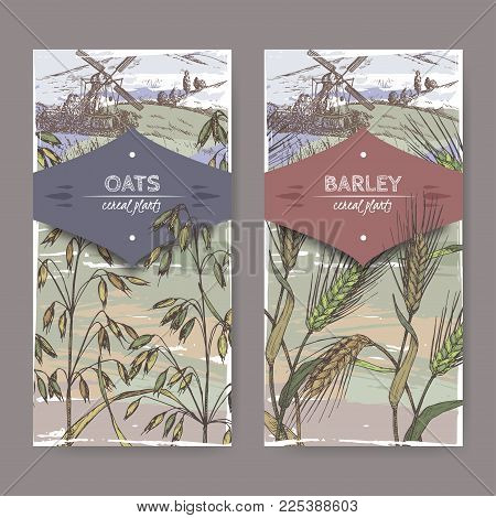 Set of two color labels with Barley aka Hordeum vulgare, oats aka Avena sativa and field landscape sketch. Cereal plants collection. Great for bakery, agriculture, farming design.