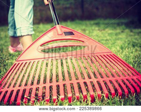 Gardening. Female Adult Raking Green Lawn Grass With Rake Tool On Her Backyard, Wide Angle View