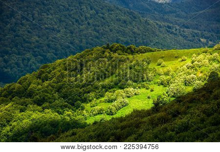 Grassy Slopes Of Carpathian Mountains. Beautiful Summer Landscape On A Cloudy Day. Location Runa Mou