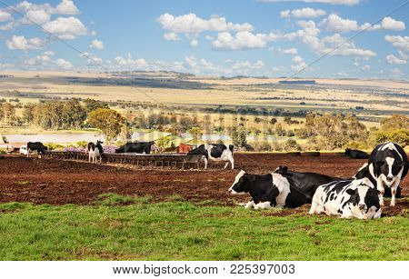 African farm, cattle, wide land, thatched roof building, farming series