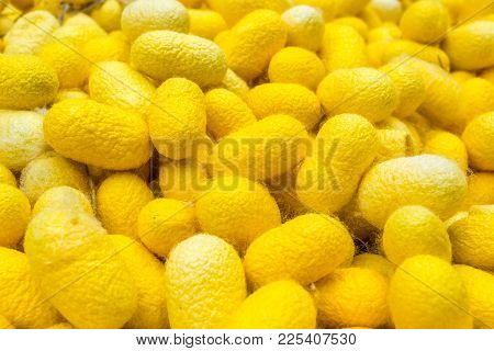 Golden Yellow Color Silk Cocoons For Background