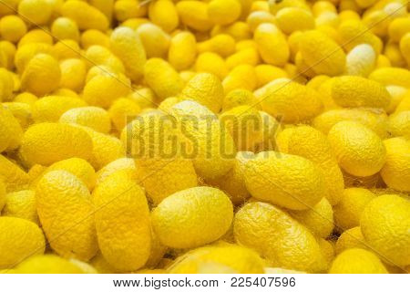 Yellow Color Silk Cocoons Background For Wallpaper