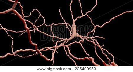 Dopaminergic Neuron. Degeneration Of This Brain Cells Are Responsible For Development Of Parkinson's