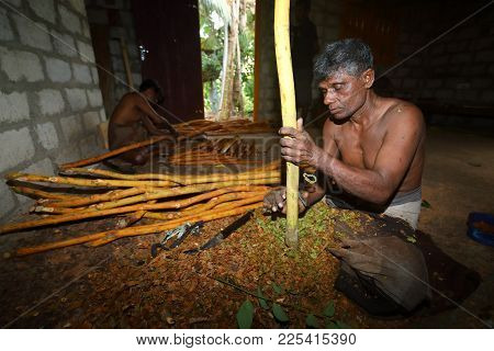 The Cinnamon Farmer And Production In Sri Lanka