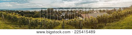 Panorama Of Lake Constance With Winery And Grapevines