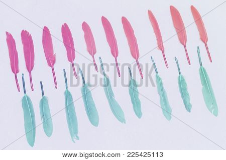 Colored Colorful Feathers, Pink And Green, Light Pastel Background
