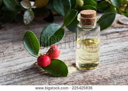 A Bottle Of Wintergreen Essential Oil With Fresh Wintergreen Twigs On White Painted Wood