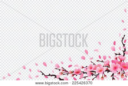 Realistic Sakura Japan Cherry Branch With Blooming Flowers. Spring Fresh Pink Design On Transparent