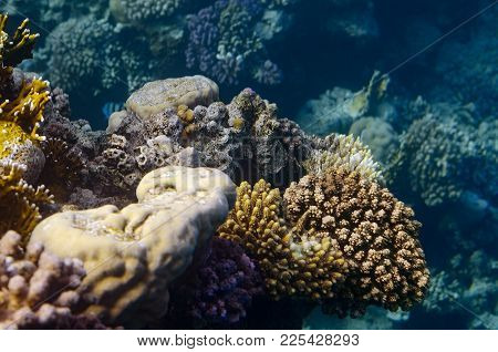 Tropical Fish And Corals In The Red Sea, Egypt