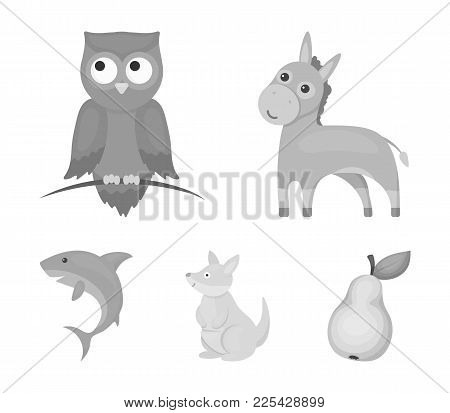 Donkey, Owl, Kangaroo, Shark.animal Set Collection Icons In Monochrome Style Vector Symbol Stock Ill