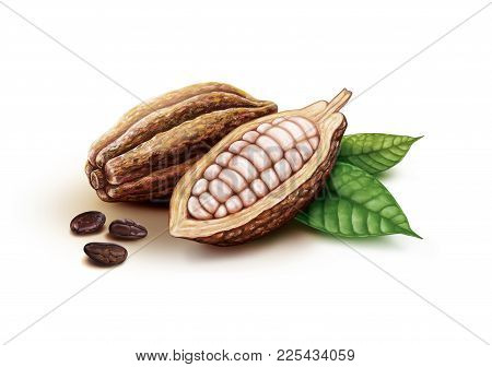 Cocoa Pods, Cocoa Beans Fruits And Leaves