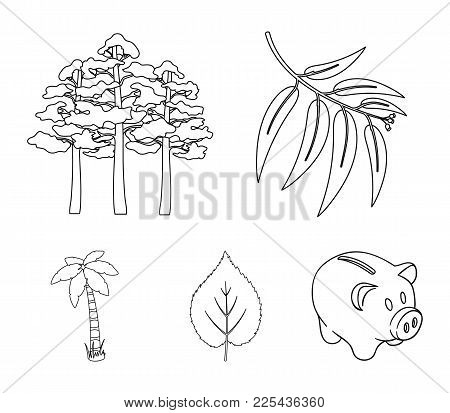 Branch Zucalyptus, Pine, Leaf, Palm.forest Set Collection Icons In Outline Style Vector Symbol Stock