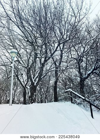 Winter Day In A Snowy Park. Trees And Streetlight Covered In Snow.