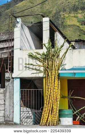 Cut Sugar Cane Pieces On Side Of Building In Rural Ecuador, South America