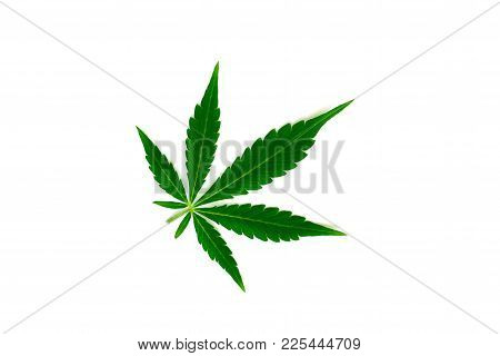 Beautiful Green Cannabis Leaf Macro View Isolated Medical Use Thc And Cbd