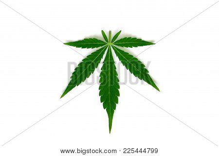 Beautiful Green Cannabis Leaf Macro Top View Isolated Medical Use Thc And Cbd