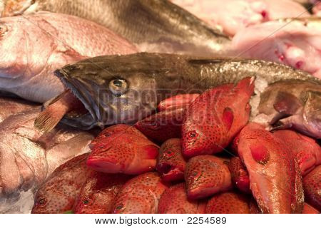 Fish At Farmer'S Market, Paris, France